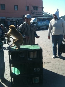 Marrakech Souks Monkey